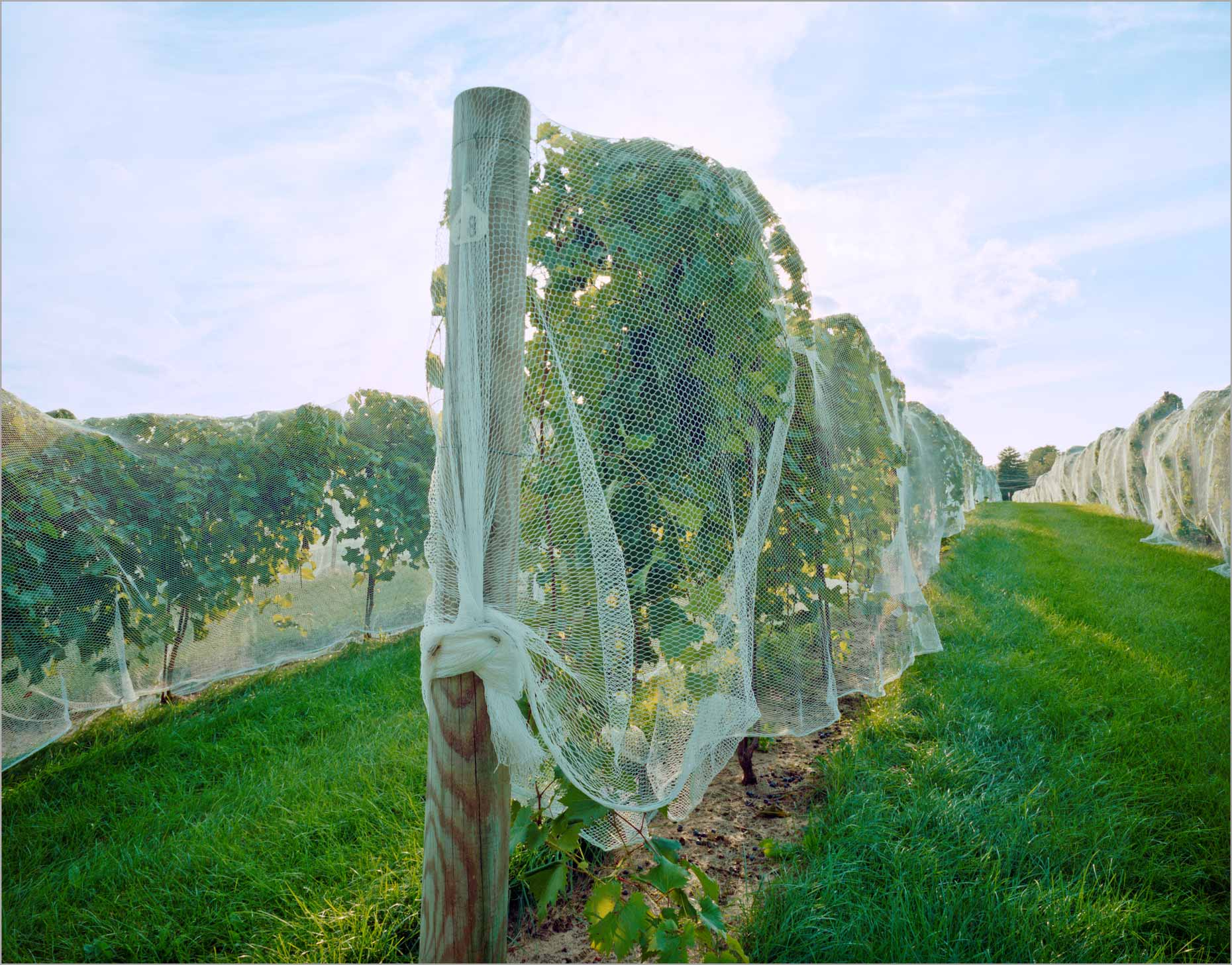 Vineyard Bird-netting