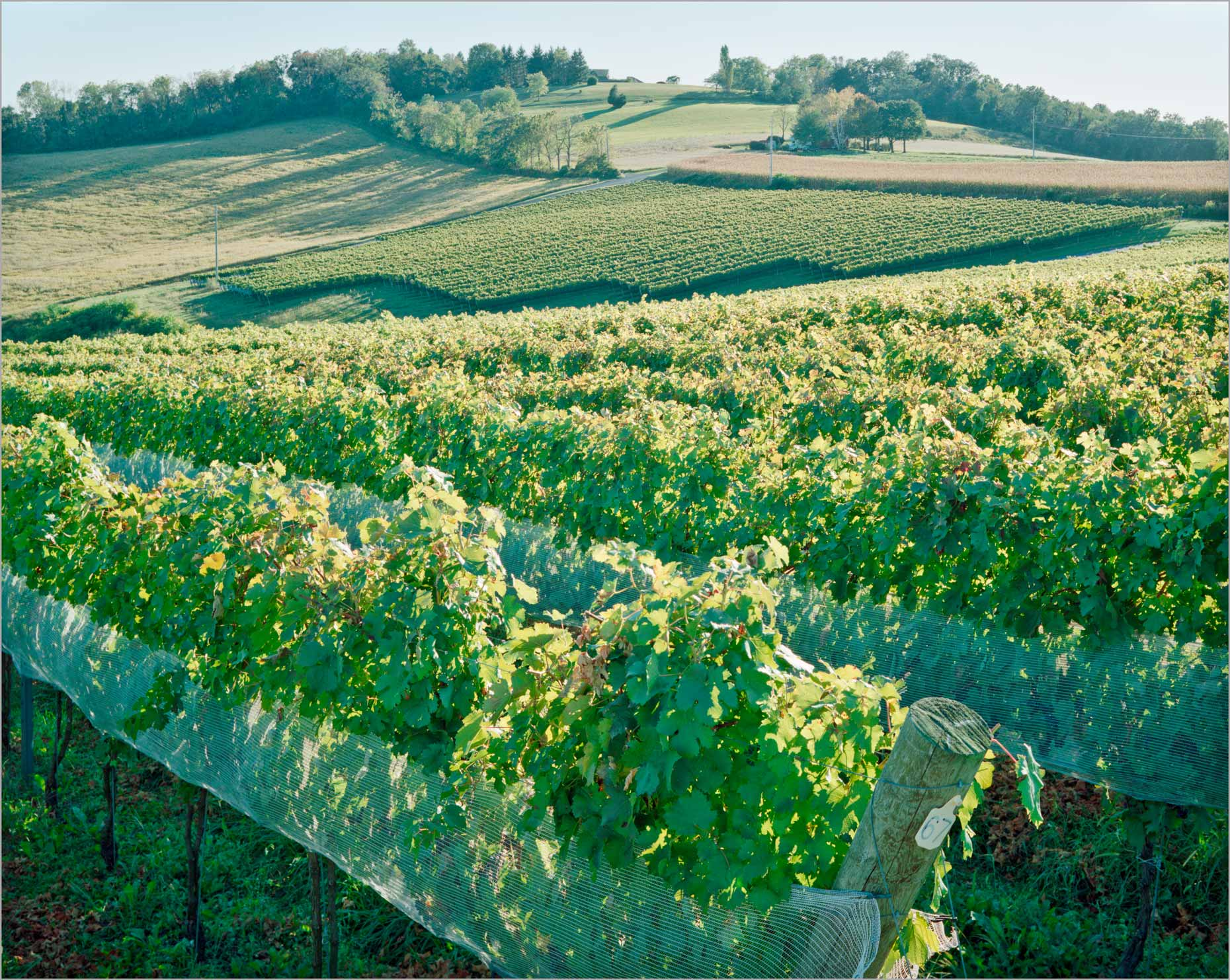 Vineyard Terrain